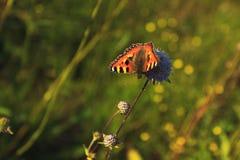 Motyl, kwiat obraz royalty free