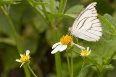 Motyl & kwiat Zdjęcie Royalty Free