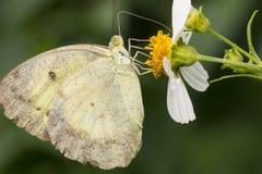 Motyl & kwiat Zdjęcie Stock