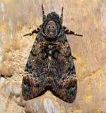 Motyl, ćma Obrazy Stock