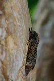 Motyl, ćma Obraz Royalty Free