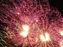 motyl mgiełki purpurowy elektryczne obrazy royalty free