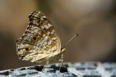 Motyl na świetle tło Zdjęcie Stock