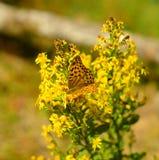 Motyl na żółtej roślinie w świetle słonecznym Zdjęcie Royalty Free