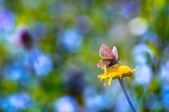Motyl na żółtym kwiacie obrazy royalty free