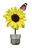 Motyl na żółtym kwiacie (lampa) Zdjęcia Royalty Free