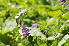 Motyl na błękitnym kwiacie na lato łące Zdjęcie Royalty Free
