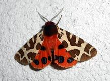 Motyl na ścianie Obrazy Royalty Free