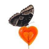 Motyl na czerwonym cukierku Obraz Stock