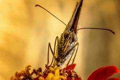Motyl na czerwonym kwiacie z złotym zamazanym tłem zdjęcia royalty free