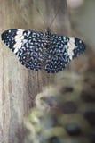 Motyl na drewnianym słupie Zdjęcia Royalty Free