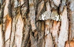 Motyl na drzewie zdjęcia royalty free