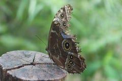 Motyl na drzewnym bagażniku Obraz Stock