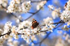 Motyl na gałąź 03 Obrazy Stock