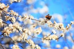 Motyl na gałąź 01 Zdjęcie Stock