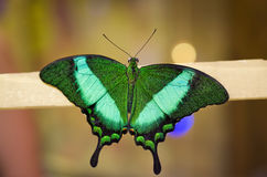Motyl na kiju Obraz Stock