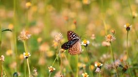 Motyl na kwiacie zdjęcie wideo