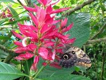 Motyl na kwiacie Zdjęcia Stock