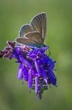 Motyl na kwiacie obrazy stock