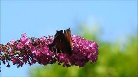Motyl na kwiacie zbiory wideo