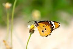 Motyl na kwiacie Obraz Stock