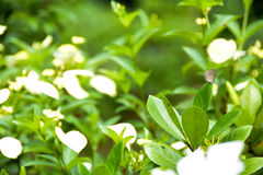 Motyl na kwiacie i liściach zdjęcie royalty free
