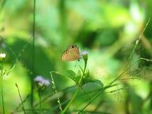 Motyl na kwiat trawie Fotografia Royalty Free