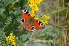 Motyl na kwitnienie roślinach Obraz Royalty Free