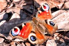 Motyl na liścia łóżku Obrazy Royalty Free