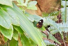 Motyl na liściu na słonecznym dniu obraz royalty free