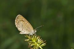 Motyl na liściu Fotografia Stock