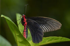 Motyl na liściu Obrazy Stock