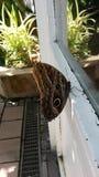 Motyl na okno Obrazy Royalty Free