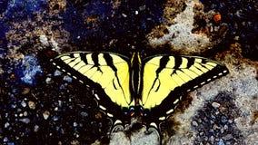 Motyl na otoczakach Fotografia Royalty Free