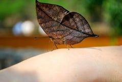 Motyl na palcu Fotografia Stock