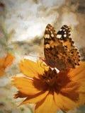 Motyl Na Pomarańczowym kwiacie Zdjęcie Royalty Free