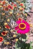 Motyl na różowym kwiacie obrazy stock