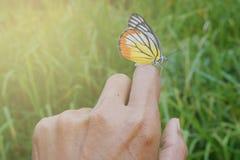 Motyl na ręce obrazy royalty free