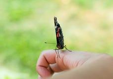 Motyl na ręce Obrazy Stock