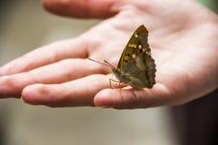 Motyl na ręce Obraz Royalty Free