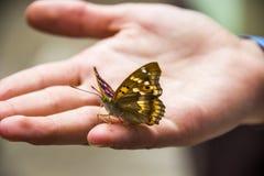Motyl na ręce Obraz Stock
