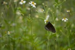 Motyl na zieleni Fotografia Royalty Free