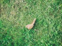 Motyl na zielonej trawie zdjęcia stock