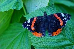 Motyl na zielonym liścia letnim dniu Fotografia Royalty Free