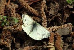 Motyl na ziemi fotografia stock