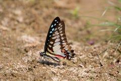 Motyl na ziemi Zdjęcia Stock