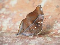 Motyl na zmielonym Zamazanym widoku naturalny tło fotografia royalty free