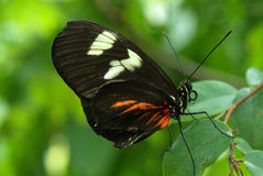 Motyl Od plecy Zdjęcie Stock