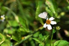 Motyl od Tajwan obraz stock