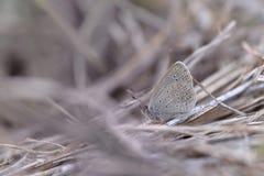 Motyl od Tajwan zdjęcie stock
